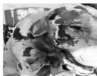 நீர்கொழும்பில்  கூண்டிற்குள் மண்ணெய் ஊற்றி நாய் எரியூட்டி கொலை!  பொலிஸார் விசாரணை -வீடியோ