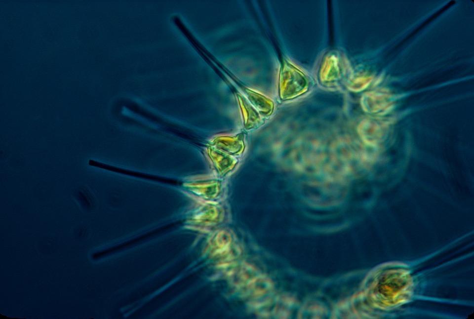 phytoplankton-1348508_960_720_14268  நிறம் மாறும் கடல்கள்... நிஜமாகிறதா ஆறாவது பேரழிவு! phytoplankton 1348508 960 720 14268