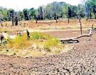 வரட்சியினால் பாதிப்பு: யாழ். மாவட்டத்துக்கு 5 கோடி ரூபா ஒதுக்கீடு