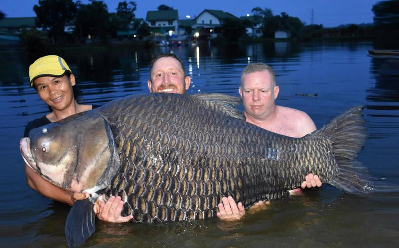 fish  தாய்லாந்து ஏரியில் பிடிக்கப்பட்ட 104 கிலோகிராம் எடையுள்ள மீன் fish e1562242188472