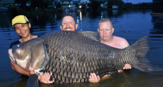 தாய்லாந்து ஏரியில் பிடிக்கப்பட்ட 104 கிலோகிராம் எடையுள்ள மீன்