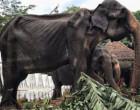 இலங்கை யானை: சமூக ஊடகங்களில் வைரலான புகைப்படம் – கானுயிரின் கதை