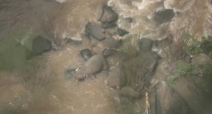 தாய்லாந்து: மூன்று வயது குட்டி யானையைக் காப்பாற்ற ஐந்து யானைகள் நீர்வீழ்ச்சிக்குள் விழுந்து பலி – உருக்கமான நிகழ்வு