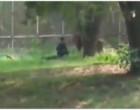 `நான் சாக வந்திருக்கேன்… என்னை யாரும் காப்பாத்தாதீங்க'- சிங்கத்தின் முன் அமர்ந்த இளைஞர் (video)