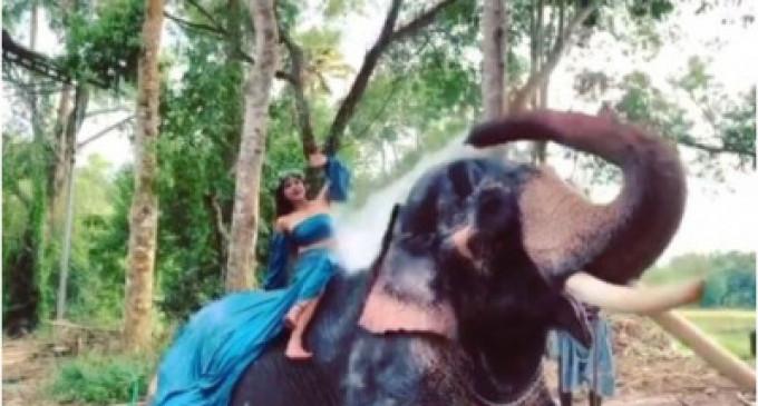 சாக்ஷி அகர்வாலை குளிக்க வைத்த யானை (வீடியோ)