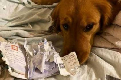 dog-getting-appreciations-for-destroying-owners-passport