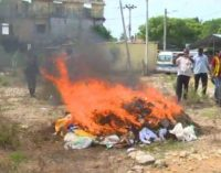 யாழ்ப்பாணத்தில் 296 கிலோ கேரளா கஞ்சா அழிப்பு! (Video)