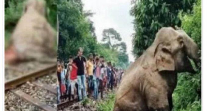 யானை ரயில் மோதி பலி: வைரலான புகைப்படம் – கண்ணீர் சிந்தும் சமூக ஊடகம்