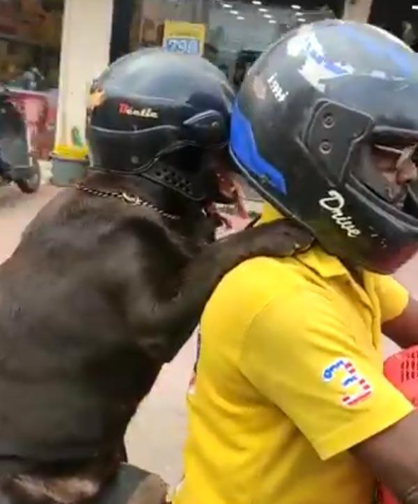 xdog-wear-helmet-bike-awareness5-1578573968.jpg.pagespeed.ic_.kJvJLEZvy1