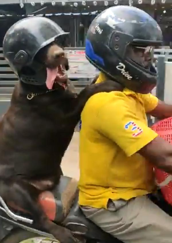 xdog-wear-helmet-bike-awareness9-1578573996.jpg.pagespeed.ic_.katuZTdiAN