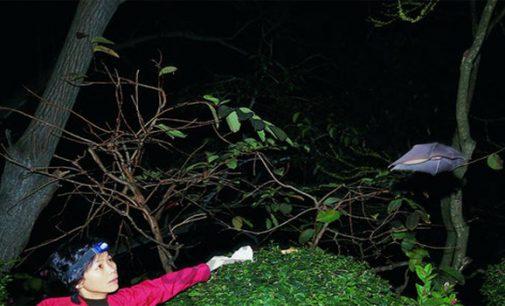 கொரோனா வைரஸ் தொடர்பான முக்கிய விபரங்களை கண்டுபிடித்த சீன விஞ்ஞானிக்கு வாய்ப்பூட்டு – சர்வதேச ஊடகம்