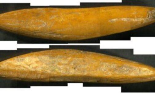 இலங்கை அகழாய்வில் ஆதிமனிதர்களின் 48,000 ஆண்டுகளுக்கு முந்தைய ஆயுதங்கள்