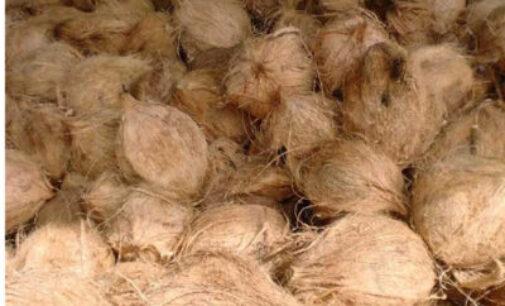 சுற்றளவுகளுக்கு ஏற்ப தேங்காய்களின் அதிகபட்ச விலைகள்: வர்த்தமானி வெளியாகியது
