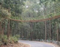 இந்தியா : மிருகங்களுக்காக உருவாக்கியுள்ள தொங்கு பாலம்