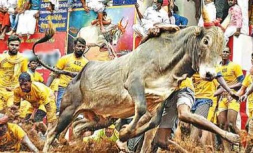 அலங்காநல்லூர் ஜல்லிக்கட்டு- வாலிபர் பலி